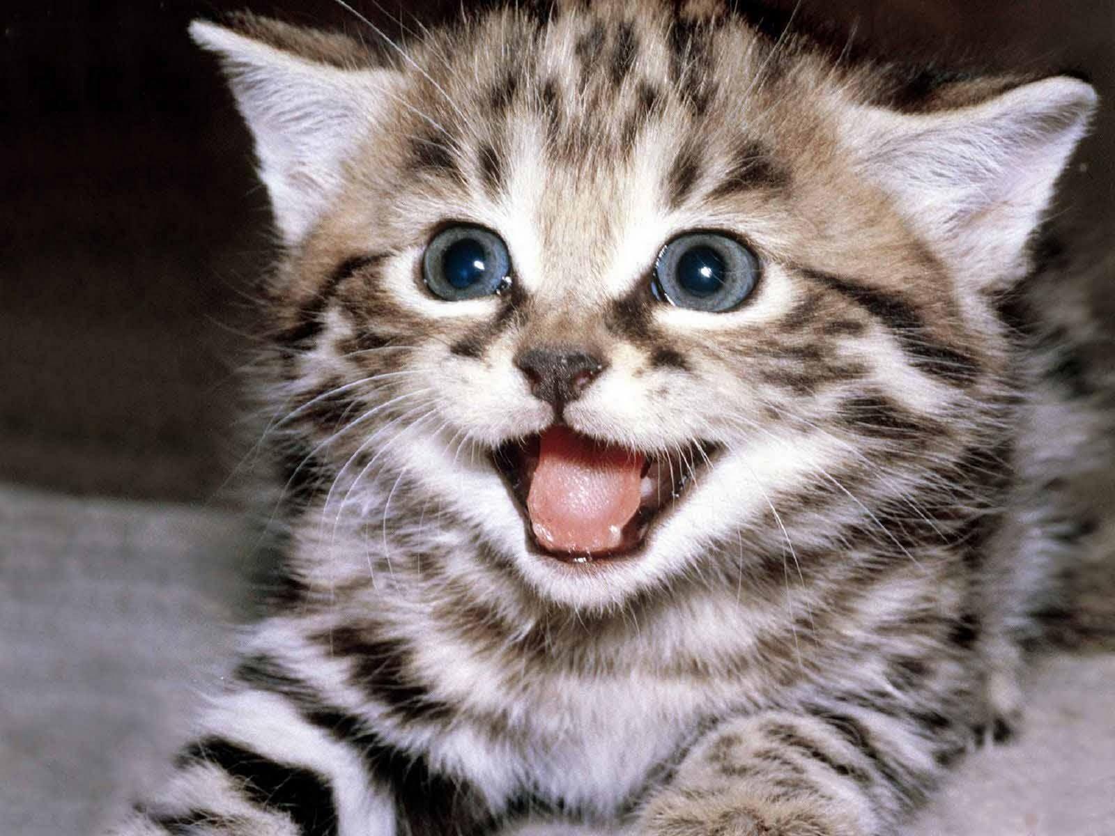 Imágenes Y Fotos De Gatos Bonitos Adorables Y Tiernos